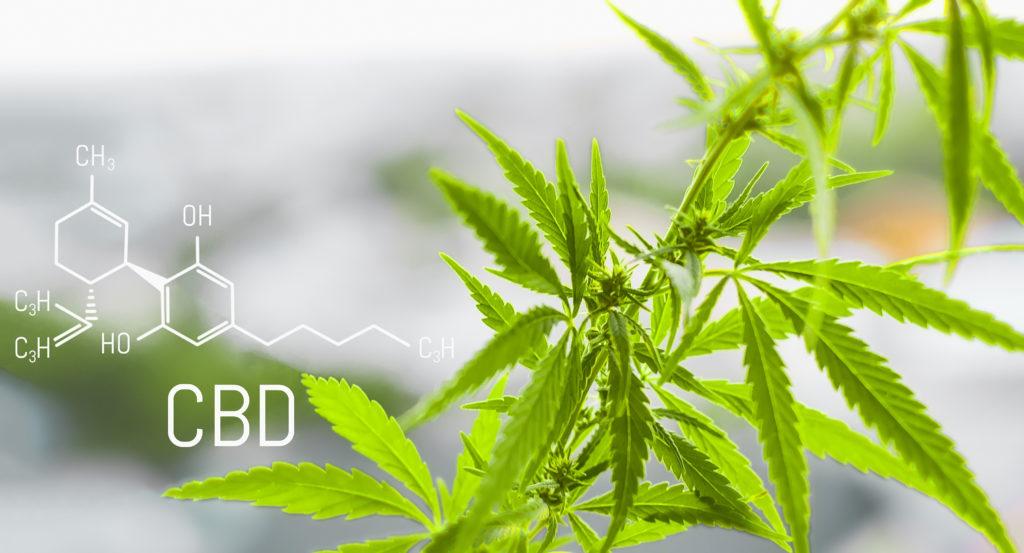 CBD Verses THC | Hempfield Botanicals
